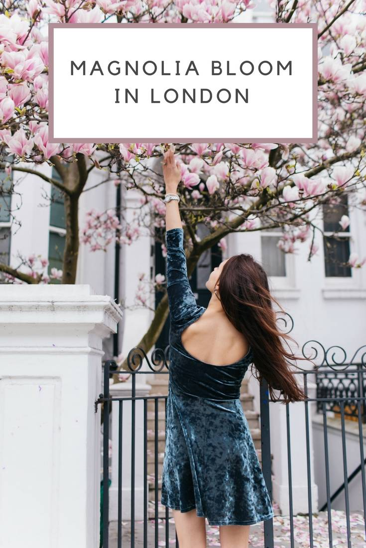 magnolia bloom in london blog ok but first coffee katya jackson